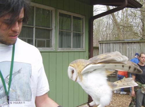 bl barn owl